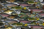 Realtree 10011 Packed Fish, Print Concepts
