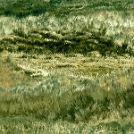 Mustang Meadow 51756 777S Grassy Texture Green, South Sea Imports