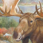 Into the North 81535 427 Brown Moose Panel South Sea Imports