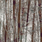 Into the Woods Flannel 8496F 47 Trees Moss, Kanvas by Benartex