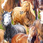 Wild At Heart 12603 729 Packed Horses Multi, Wilmington Prints