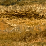 Mustang Meadow 51756 258S Grassy Texture Brown Gold, South Sea Imports
