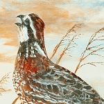 Quail Run 94768 429 Panel South Sea Imports