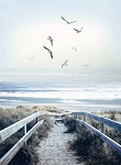 Call of the  Wild R4620 312 Beach Steps Digital Panel, Hoffman