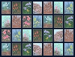 Alaskas National Parks Digital 3025 Flower Scenes, Jon Van Zyle by P & B Textiles