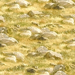 Breaking Light 51763 527 Rock and Grass Gold, Wilmington Prints