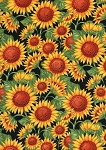 Timeless Treasures Sunflower C7333 Black