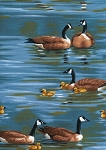 Timeless Treasures C8290 Blue Geese