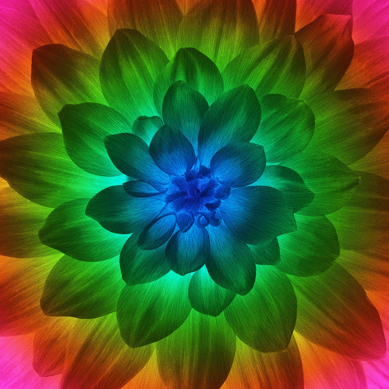Dream Big Floral Digital Panel P4389 657 Blacklight Spectrum, Hoffman    Hingeley Road Quilting