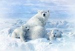 Call of the Wild Digital Panel R4560 307 Polar Bears, Hoffman