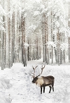 Call of the Wild Digital Print R4562 15 Reindeer, Hoffman