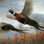 Wild Pheasants 24532 X Flying Pheasants, Quilting Treasures