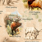 Mountain Elk 25809 A Elk Vignettes Light Tan, Quilting Treasures