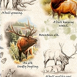 Mountain Elk 25809 K Elk Vignettes Stone, Quilting Treasures