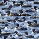 Hautman Bros Artwork Loons 27430 B Blue Loons, Quilting Treasures