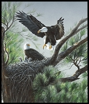 Eagles Nest Digital Panel 50062DP X, Windham