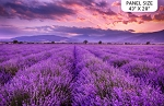 Lavender Fields DP23824 84 Digital Panel Lavender Field Northcott