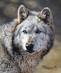 Wild and Beautiful Digital Panel P9280 Wolf, Riley Blake
