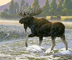 Natures Finest P9951 Moose Digital Panel, Riley Blake
