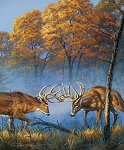 Natures Finest P9953 Deer Digital Panel, Riley Blake
