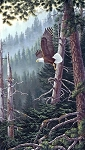 Naturescapes Beyond the Forest DP21936 91 Eagle Digital Panel, Northcott
