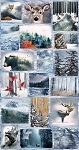 Call of the Wild Northwoods Postcard 24 Panel P4354 113 Frost, Hoffman Digital Panel