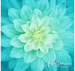 Dream Big Floral Digital Panel P4389 560 Tidepool Spectrum Print, Hoffman