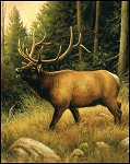 Majestic Digital Panel PD6480 Elk, Riley Blake