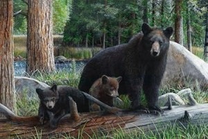 Naturescapes Black Bear Adventure DP21937 36 Bear Digital Panel,  Northcott